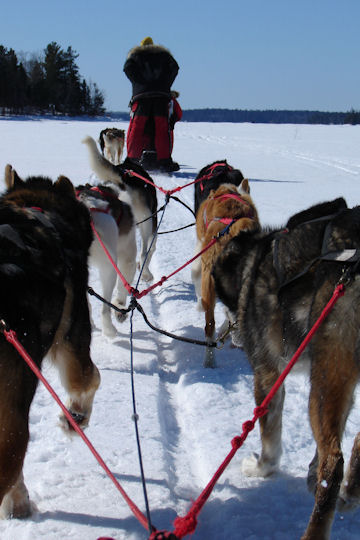 Quality Link from Chilly Dogs Sled Dog Trips